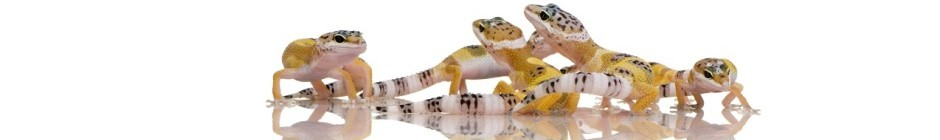 Gecko Care